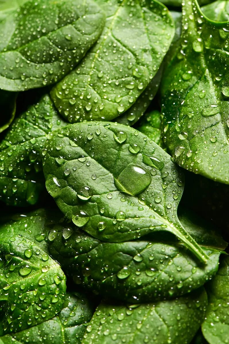Green spinach leaves london food photographer macro photography